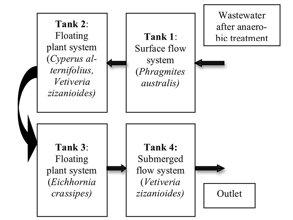 Experimental diagram of the combined system of reed, umbrella plant, water hyacinth and vetiver grass at pilot scale