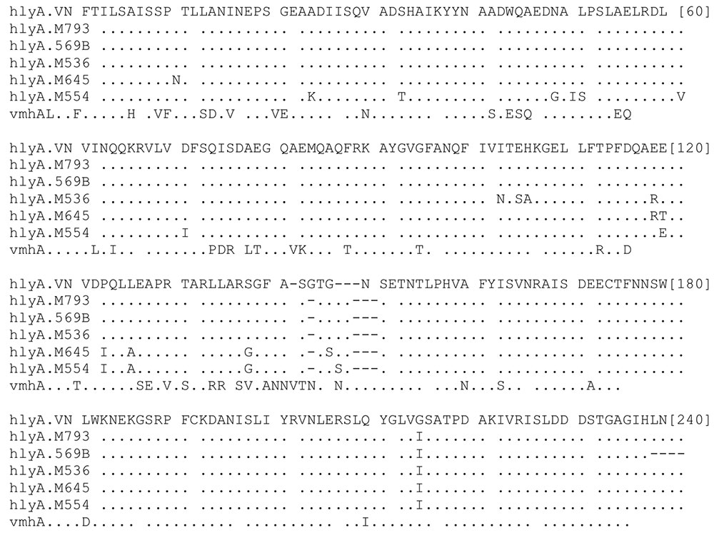 Comparison of amino acid sequences of the hlyA.VN gene with some homology sequences