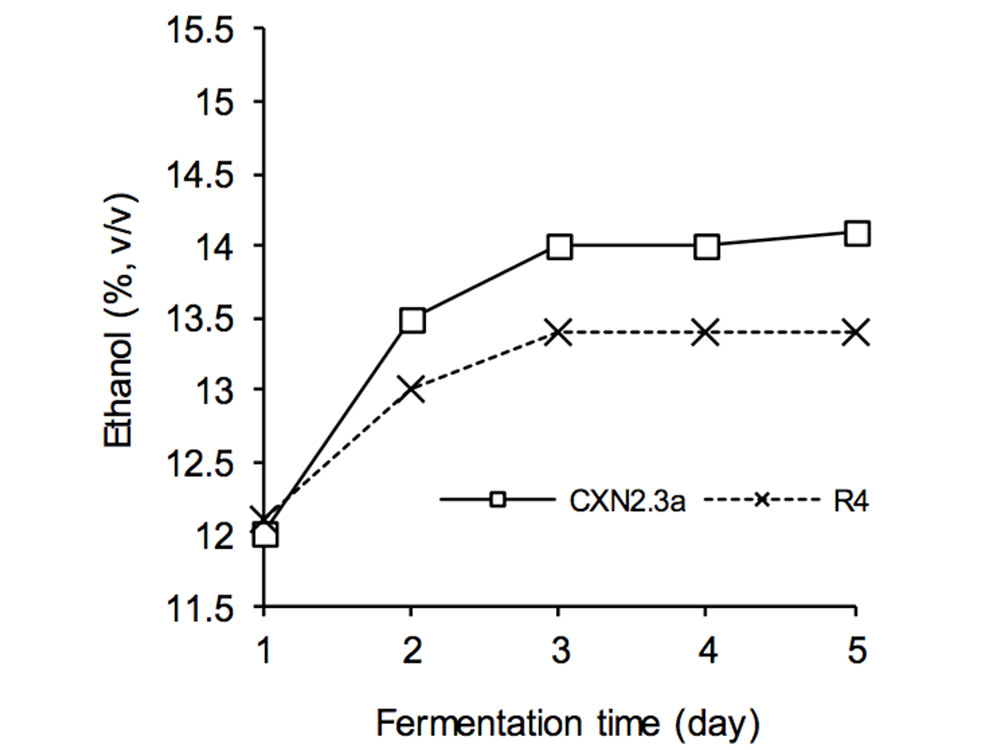 SSF of RWC slurry treated with crude enzyme of fungal trains and S. cerevisiae KV-25