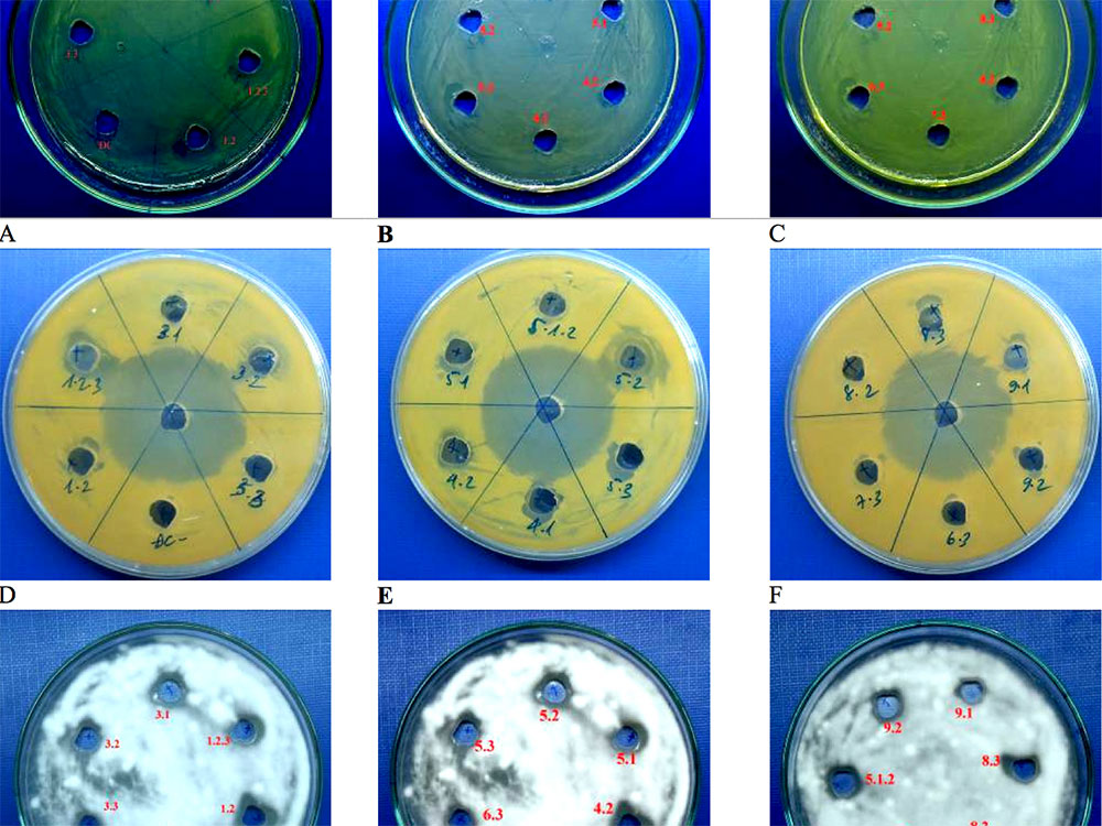 Antimicrobial activity of marine bacteria using agar diffusion assay against tested microorganism E. coliJM109 (A-C), S. aureusATCC10832(D-E), F. oxysporum (G-J)