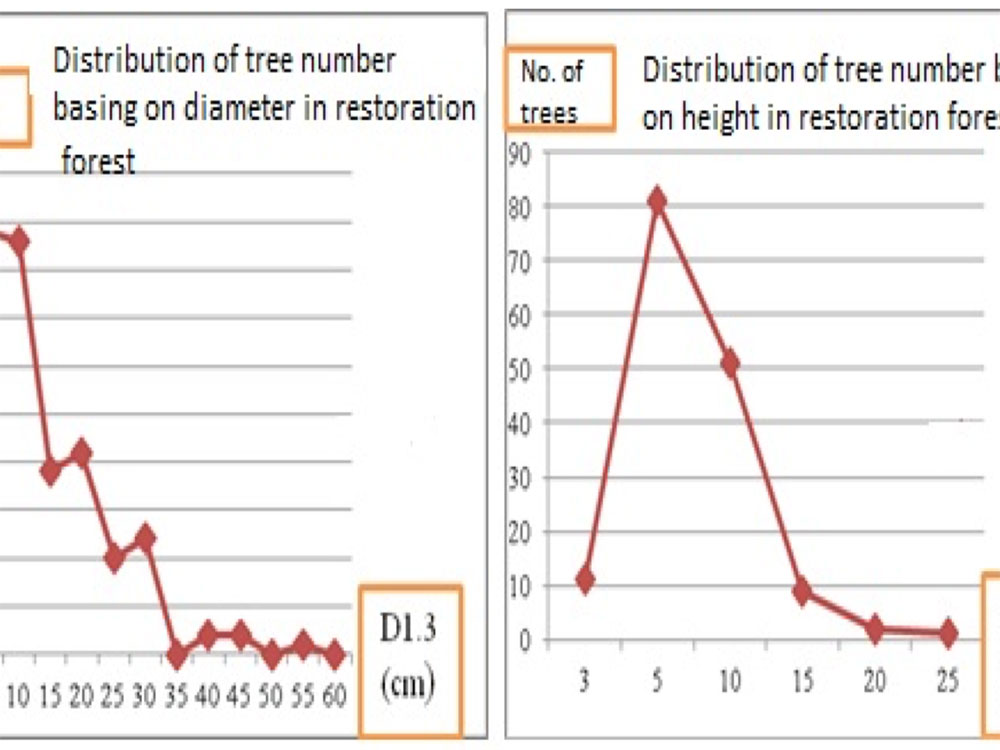 The distribution of tree number depending on diameter and height in restoration forest